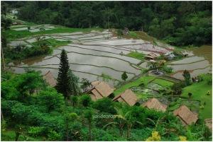 ricefieldDSC_0129