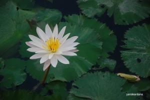 lotusdsc_6080-2